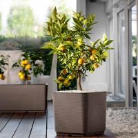 PLANT VASES & POTS